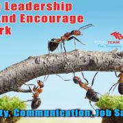 How Leadership Creates Teamwork